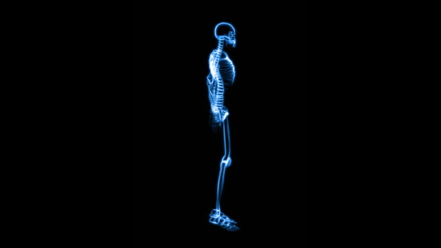 X-Ray of Human Skeleton (HD) video