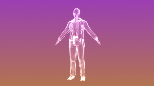 X-ray of man with weapon | Loopable video