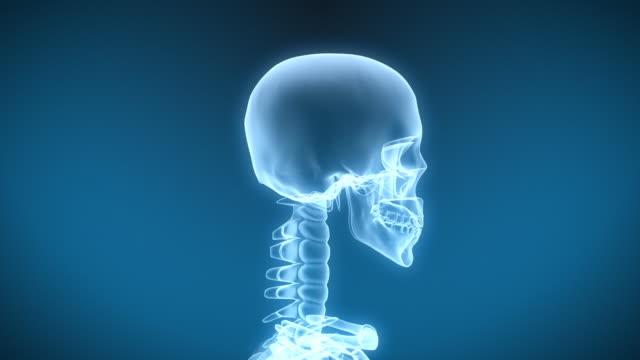 X-Ray Skeleton Drinking Fluid video