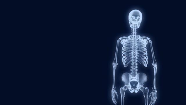 X-Ray Skeleton Presentation 2 video