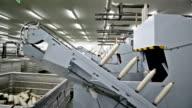 Yarn rolls on conveyor belt video