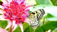 Yellow and Black Butterfly, Tropical Flower video