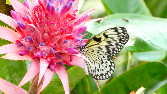 4K Yellow and Black Butterfly, Tropical Flower video
