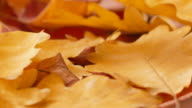 Yellow and red autumn leaves video