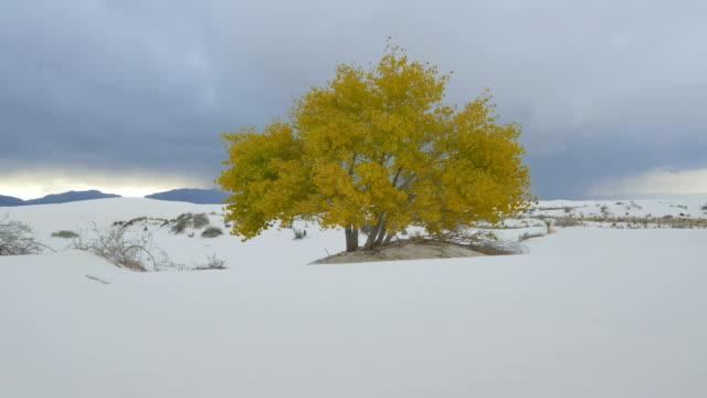 Yellow autumn tree in beautiful white sand desert video