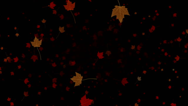 yellow, brown, red colorful leaves autumn colors falling down from top on black background,  leaf fall season video