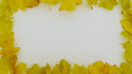 HD: Yellow Colorful Leaves In Snow video