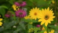 Yellow daisy camera slide video