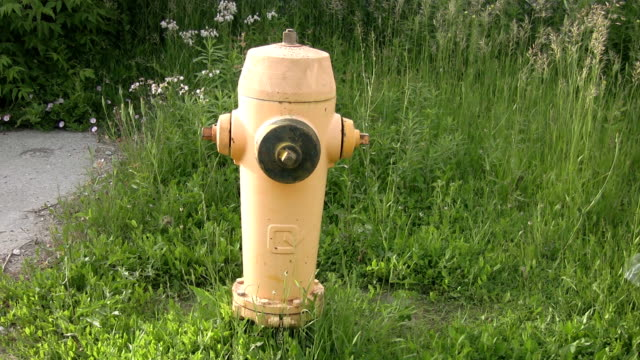 Yellow fire hydrant. video