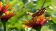 Yellow Flower and butterfly video