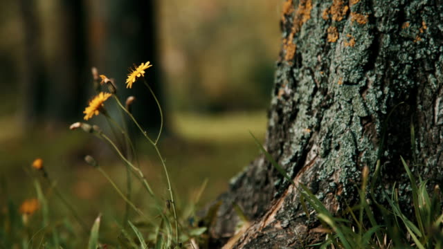 Yellow flower in the autumn park video