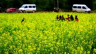 Yellow flowers field video