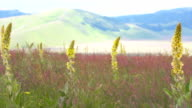 Yellow flowers in plantation video
