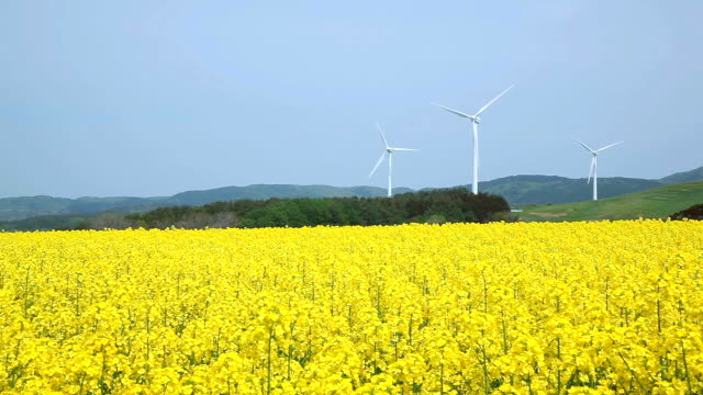 Yellow landscape with turbines video