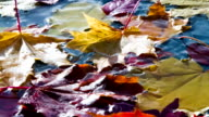 Yellow Leaves Falling in Autumn Puddle video