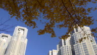 Yellow leaves of ginkgo with Tokyo Metropolitan Government Office. video