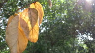 Yellow leaves with green background video
