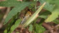 Yellow Monday Cicada video