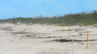 Yellow post marking turtle nests on Canaveral National Seashore, with heat haze effect video