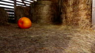 Yellow pumpkin slowly roll and stop in the middle of hayloft video