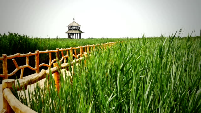 Yellow river wetland in China video
