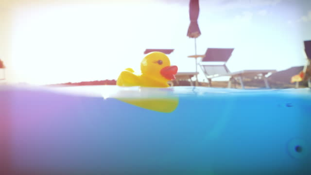 Yellow rubber duck floating in a swimming pool video