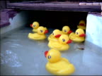 Yellow Rubber Duckies Floating by in Water 7 video
