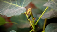 Yellow wasp sitting on green plant video