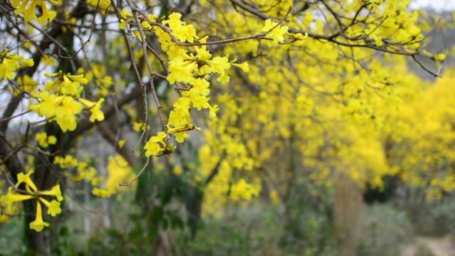 Yellower flower video