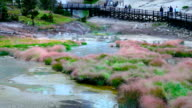 Yellowstone National Park Hot Springs. video