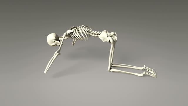 Yoga Cat Pose Of Human Skeletal video