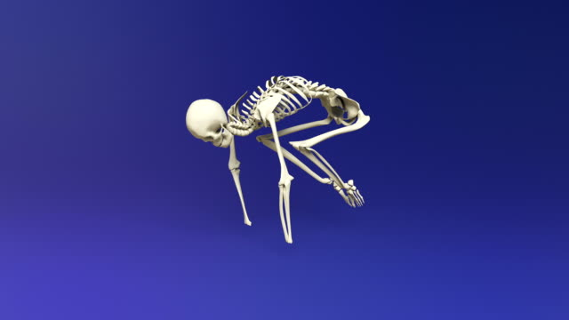 Yoga Crane Pose Of Human Skeletal video