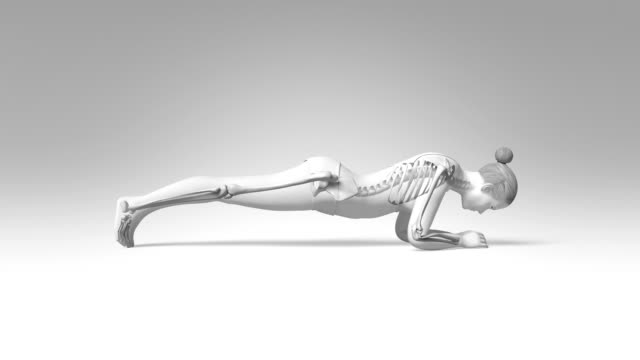 Yoga Dolphin Plank Pose Of Stretching Female With Visible Skeleton video