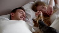 Yorkshire terrier waking up his owners video