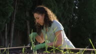 Young adult female gardening outdoors in the sunshine video