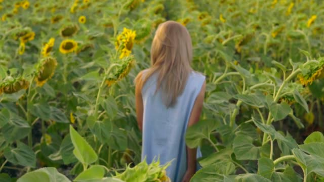 Young attractive blond woman walking in a field of sunflowers, turning around and looking in the camera. Slowmotion shot video