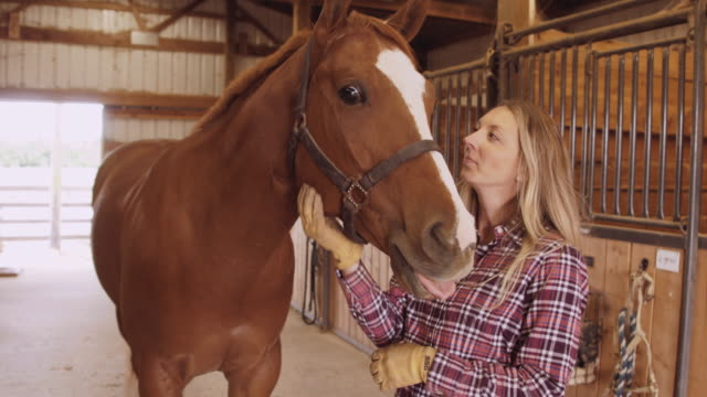Young attractive caucasian woman petting horse in stable video