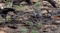 Young baby of yellow-billed Hornbill video