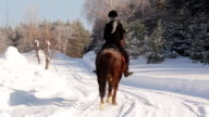 Young beautiful girl jockey riding a horse in winter forest video