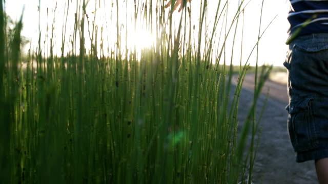 Young Boy Walking at Sunset Through Tall Grass video