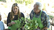 A young Caucasian woman and Senior man teach elementary students about care of plants on school field trip video