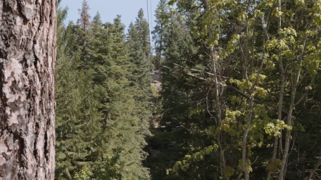 UHD 4K: Young child zip lining through the forest during a vacation video
