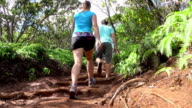 LOW ANGLE: Young couple hiking on dirt forest road leading through lush jungle video