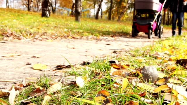 Young couple walk in autumn park with little buggy video
