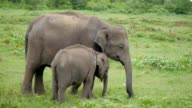 A young elephant right next to an adult one video