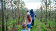 Young family walks in to a apple orchard video