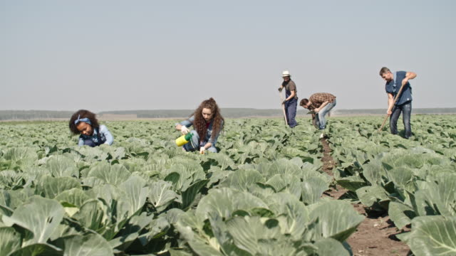 Young Farmers Working on Cabbage Field video