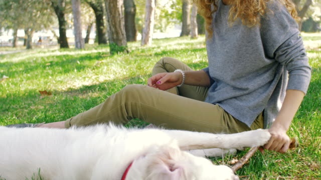 Young female playing with labrador retriever dog in park video