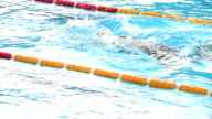 HD: Young Female Swimmer at Breast stroke video