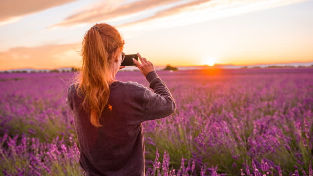 Young female tourist taking pictures of lavender fields at sunset video
